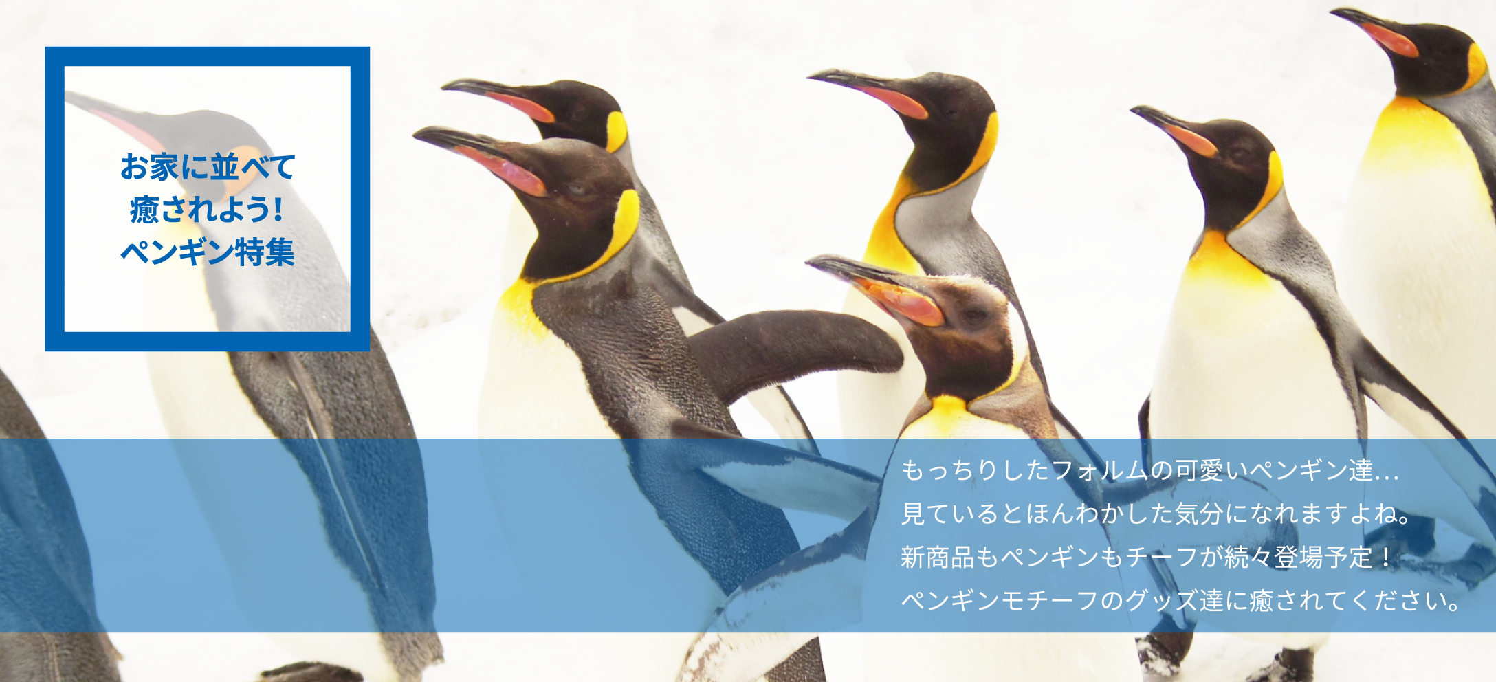 Let's be healed, Penguin feature